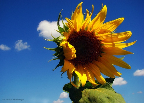 End of Summer by ClaudioAr at flickr