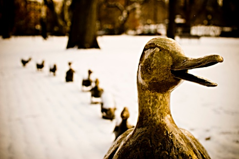 Make way for ducklings by shoothead on flickr