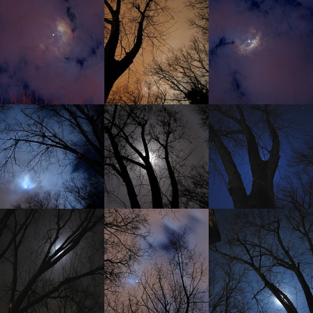 Moon Silhoutted Trees Mosaic by ctd 2005 on flickr